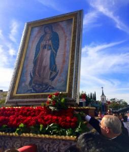 ABG Roses for La Virgen Dec072014